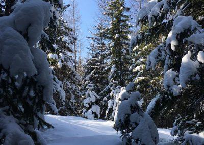 schneeschuhwandern-altenberg-an-der-rax-hanslgrabner-4