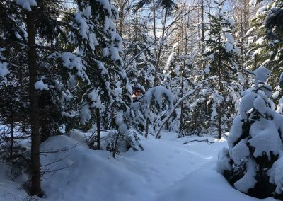 schneeschuhwandern-altenberg-an-der-rax-hanslgrabner-5